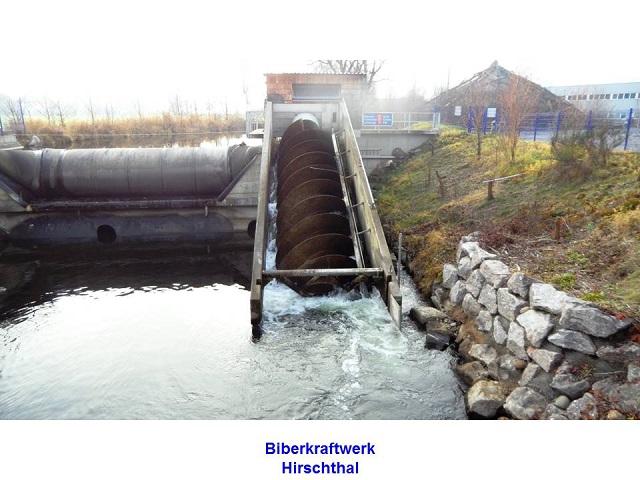 Biberkraftwerk Hirschthal