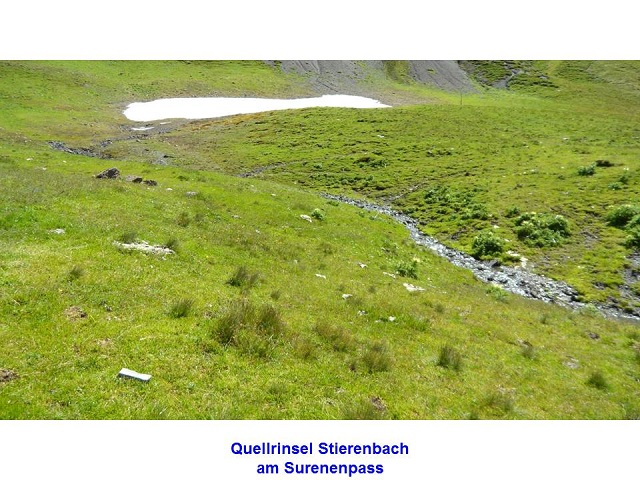 Quellrinsel Stierenbach am Surenenpass