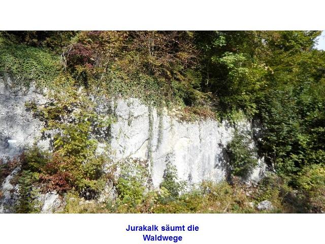 jurakalk-saeumt-die-waldwege